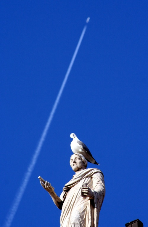 Capitoline seagull