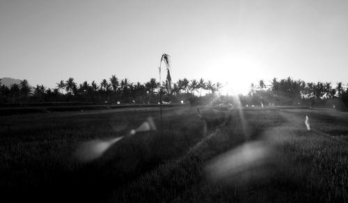 Ubud, ricefields