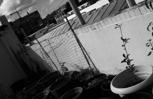 Rooftop garden, dying