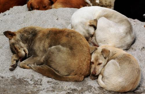 Dogs aplenty
