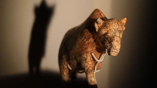 Bison, exhibition