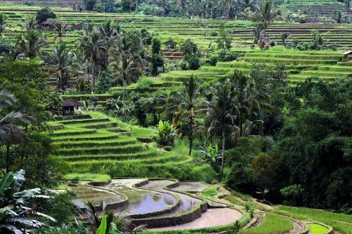 9359 Jatiluwih ricefields