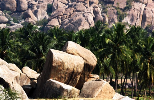 2851 Hampi stones and palms