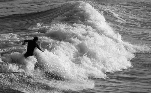 8314 Surfer
