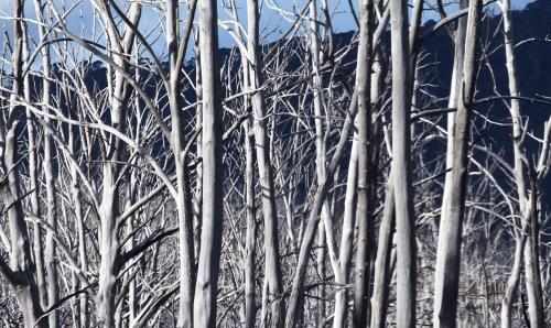 5304 Trees 2