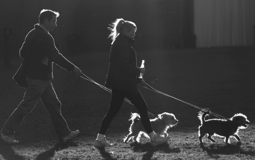 3621 Dog walkers