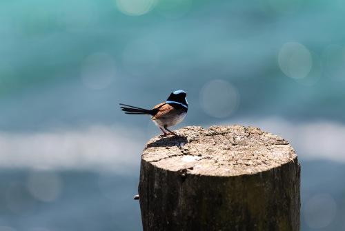 6231 Blue bird