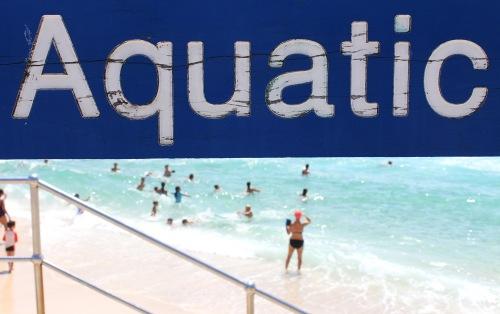 8243 Aquatic