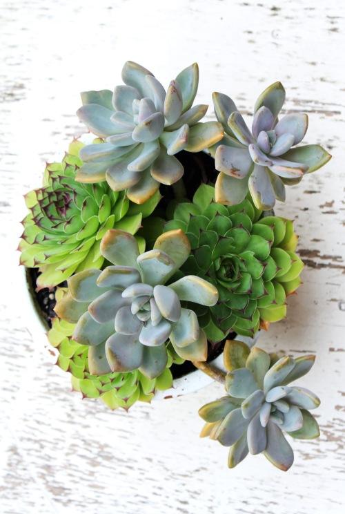 9635 Succulents