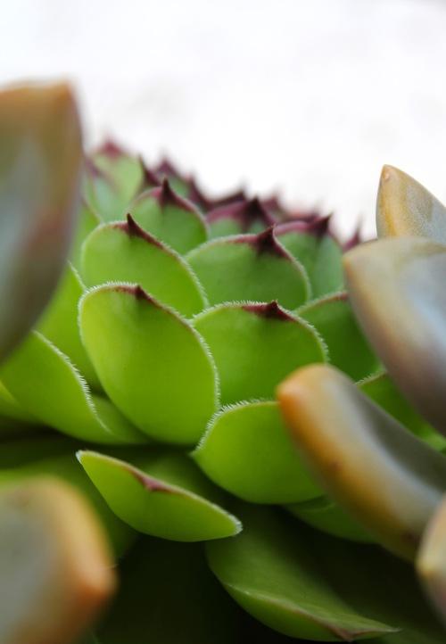 9639 Succulents