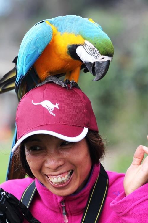 9882 Parrot head