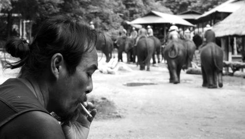 4175 Elephant dude 2