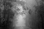 1290 Misty road