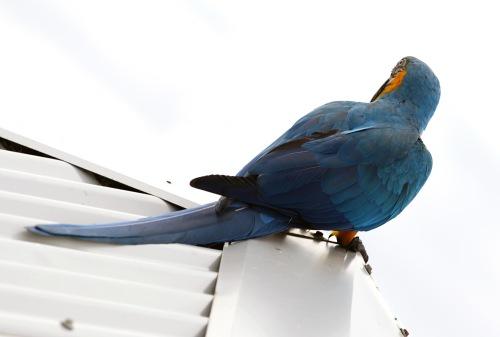9912 Parrot