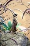 8423 Meerkat